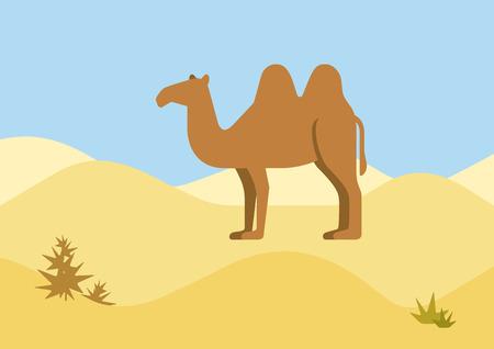 animaux du zoo: Animaux sauvages fond de l'habitat de vecteur de bande dessinée de design plat désert chameau. Appartement zoo des enfants de la nature collection.