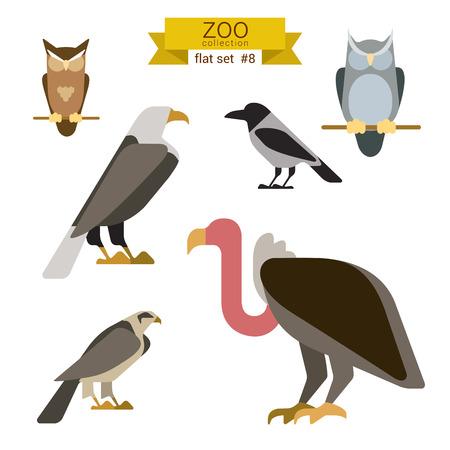 cuervo: Diseño plano pájaros vector conjunto de iconos. Búho, águila, halcón, grifo, cuervo. Colección de dibujos animados los niños zoológico plana.