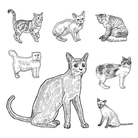 lineart: Engraving style hatch vector lineart illustration breeds of cats Illustration