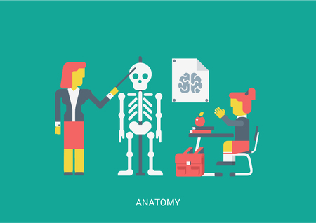 sitting at table: Flat style vector illustration biology anatomy lesson education study knowledge concept. School teacher pointer skull skeleton brain poster student pupil stretches hand sitting table. Flat collection.