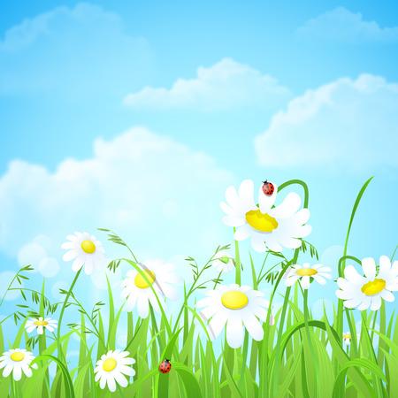 나뭇잎 흐림 효과 햇빛 빔 배경으로 좋은 반짝 신선한 데이지 카모마일 꽃 잔디 잔디. 자연 봄 여름 배경 컬렉션.