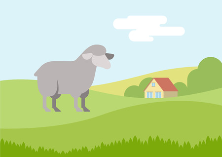 cartoon sheep: Sheep on farm grass field flat design cartoon vector animals. Flat zoo nature children collection.