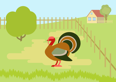 the courtyard: Turkey on the farm courtyard flat design cartoon vector wild animals birds. Flat zoo nature children collection. Illustration