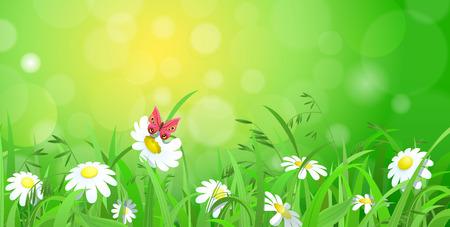marguerite: Belle brillant frais marguerite camomille papillon fleur herbe pelouse avec effet bokeh flou faisceau soleil fond. Nature milieux printemps �t� collection.
