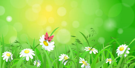 Nice shiny fresh daisy chamomile butterfly flower grass lawn with bokeh blur effect sunshine beam background. Nature spring summer backgrounds collection. Illustration