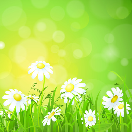 grassland: Nice shiny fresh daisy chamomile flower grass lawn with bokeh blur effect sunshine beam background. Nature spring summer backgrounds collection.