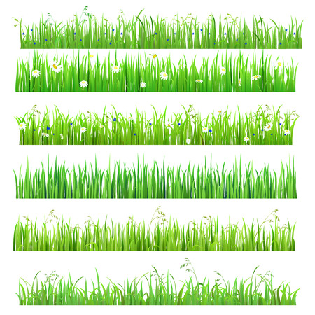 grass: Set of 6 seamless nice shiny fresh flower daisy chamomile grass lines isolated background. Nature spring summer backgrounds collection.