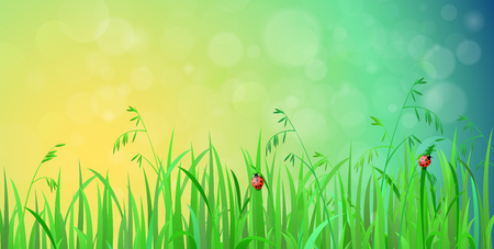 blur effect: Nice shiny fresh ladybug grass lawn with bokeh blur effect sunshine beam background. Nature spring summer backgrounds collection. Illustration