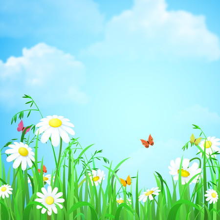 Nice shiny fresh flower grass lawn daisy chamomile butterflies with empty blue skies background. Nature spring summer backgrounds collection. Illustration