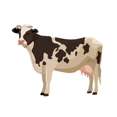domestic animal: Spotted cow vector illustration. Cute farm cattle domestic animal collection. Illustration