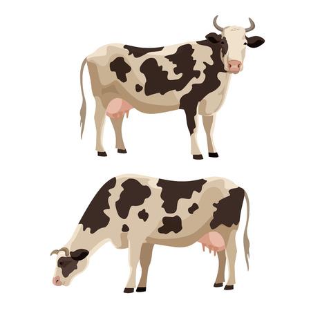 Gevlekte koe vector illustratie set. Leuke boerderij rundvee huisdier collectie.