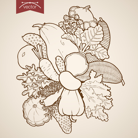 food illustration: Engraving vintage hand drawn vector vegetable. Pencil Sketch squash, pepper, carrot, zucchini, radish, beet, cucumber, horseradish food illustration. Illustration