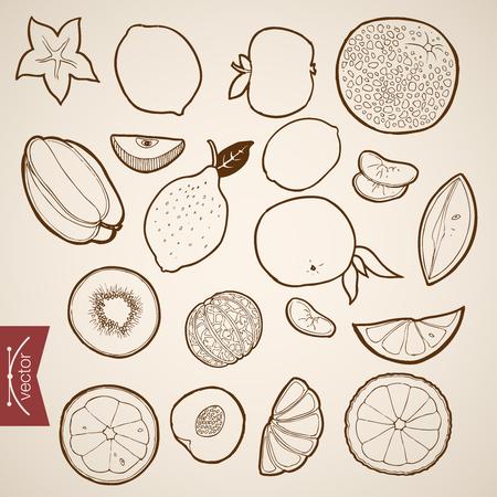 lobule: Engraving vintage hand drawn vector Fruit collection. Pencil Sketch lemon, orange, papaya, lobule citrus illustration. Illustration