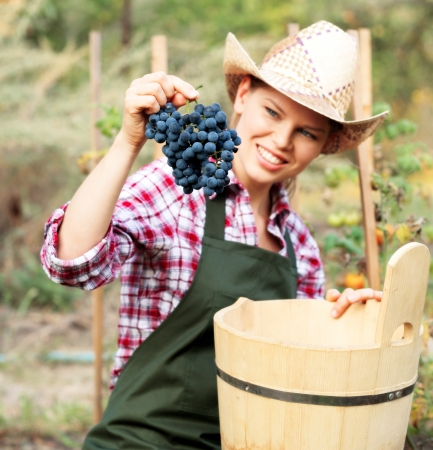 wine grower: Smiling female gardener harvesting grape and putting it into wood bucket  Young winemaker in hat and apron in the vineyard