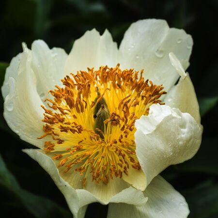 Flower Reklamní fotografie