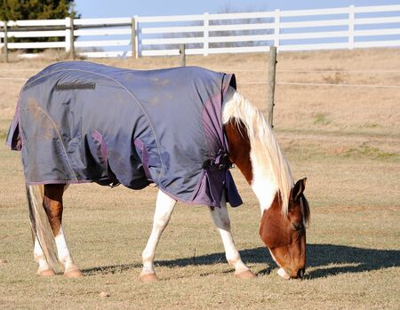 A horse wearing a rug for warmtn during the winter season. Stock Photo - 8407245