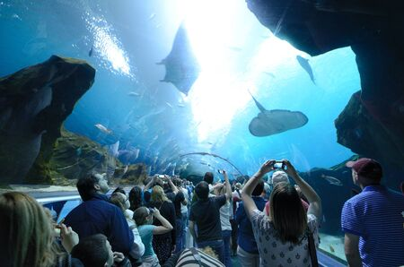 sealife: Das Georgia Aquarium, das weltweit gr��te Aquarium, in Atlanta, Georgia. 20 Februar 2011.