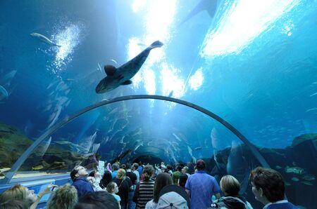 atlanta tourism: The Georgia Aquarium, the worlds largest aquarium, in Atlanta, Georgia. February 20, 2011.