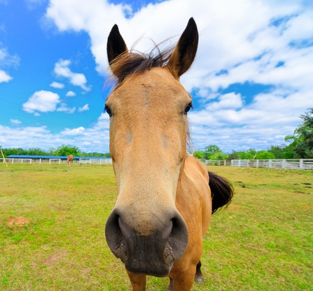 A close up of a horse on a farm Stock Photo - 9601532