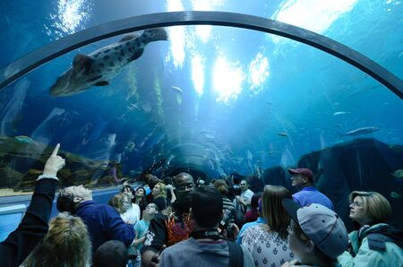 ATLANTA, GEORGIA - FEBRUARY 21: Aquatic tunnel in the Georgia Aquarium, the world