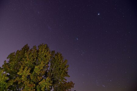 a tree under a starry night sky