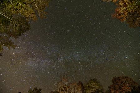 milkyway: milkyway over treetops in the sky Stock Photo
