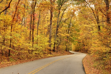 Winding road with fall foliage photo