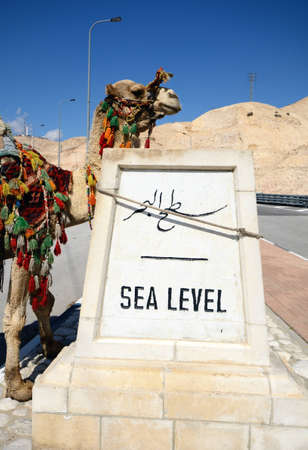 hitched: Camel hitched to a sign indicating sea level near the Dead Sea in Israel