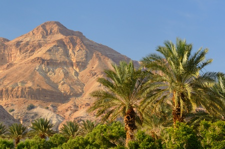 Scene at Ein Gedi, Israel. Stock Photo - 12741106