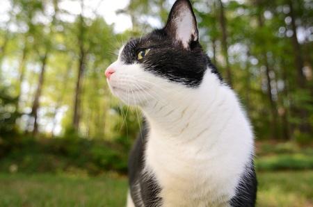 housecat: Housecat in the yard Stock Photo
