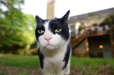 housepet: house cat in a back yard