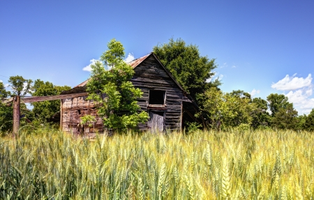 country side: Old abandoned barn and wheat in a rural North Georgia landscape. Stock Photo