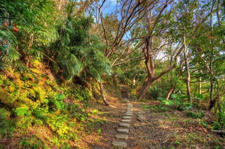 Woods: Hiking trail the jungle of Okinawa, Japan. Stock Photo