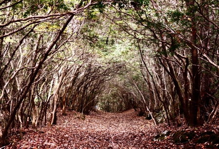 Tunnel trail at Aokigahara Forest in Japan. The forest has historic associations with demons in Japanese mythology and is unfortunately a popular place for suicides. Stock Photo - 20167847