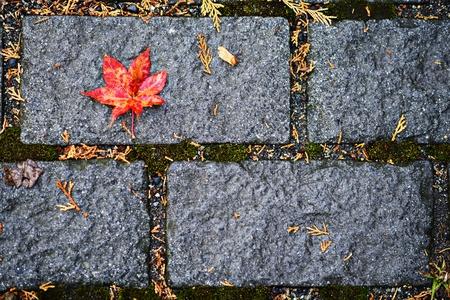 Fall leaf fallen on the floor