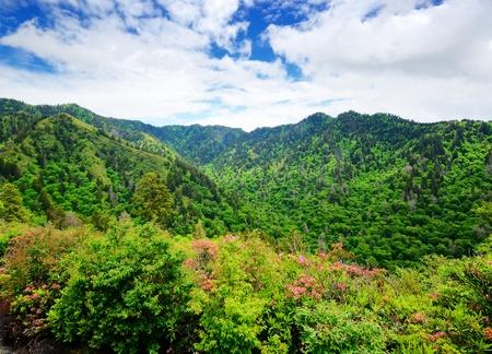 appalachian mountains: Summer landscape in the Smoky Mountains near Gatlinburg, Tennessee. Stock Photo