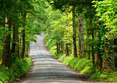 smokies: Old country lane