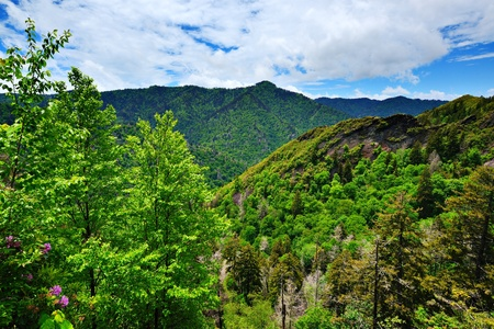 great smokies: Summer landscape in the Smoky Mountains near Gatlinburg, Tennessee. Stock Photo