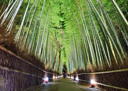 The bamboo forest of Kyoto, Japan. Foto de archivo