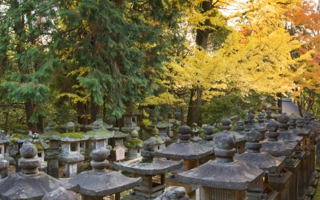 Fall foliage at Kasuga-taisha shrine in Nara Stock Photo
