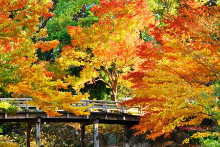 fall scenery: Fall foliage at  in Nagoya, Japan. Stock Photo