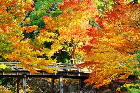 Vallen gebladerte op in Nagoya, Japan. Stockfoto