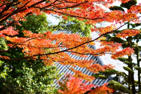 Fall Foliage in Nara, Japan. Stock Photo