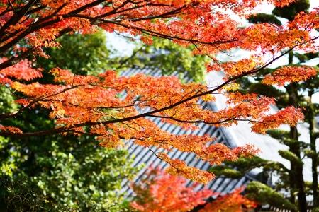 momiji: Fall Foliage in Nara, Japan. Stock Photo