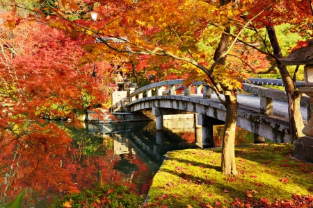 japanese fall foliage: Fall foliage at Eikando Temple in Kyoto, Japan. Stock Photo