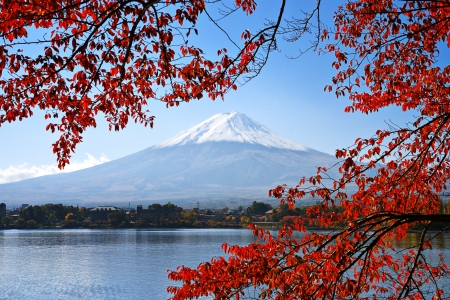 mt fuji: Mt. Fuji and autumn foliage at Lake Kawaguchi.