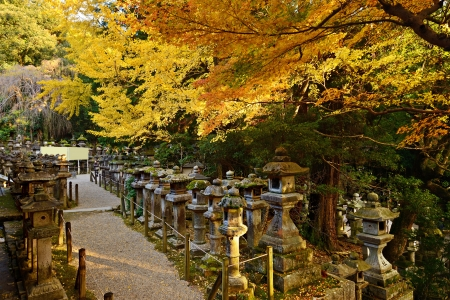 Fall foliage at Kasuga-taisha shrine in Nara photo