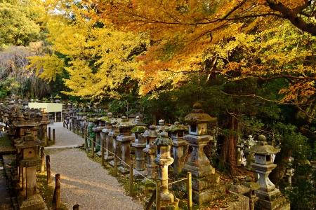 Fall foliage at Kasuga-taisha shrine in Nara Standard-Bild