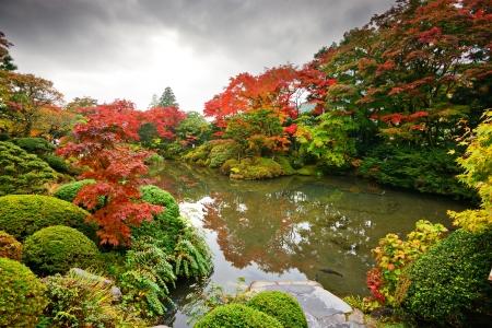 Gebladerte van de herfst in Nikko, Japan.