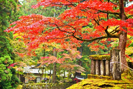 Autumn foliage in Nikko, Japan. photo